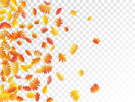 Oak, maple, wild ash rowan leaves vector, autumn foliage on transparent background. Red orange yellow rowan and oak autumn leaves. Rich tree foliage october background graphics.