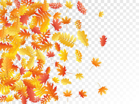 Oak, maple, wild ash rowan leaves vector, autumn foliage on transparent background. Red orange yellow rowan and oak autumn leaves. Falling tree foliage october background graphics. Vettoriali