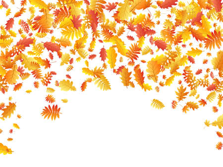 Oak, maple, wild ash rowan leaves vector, autumn foliage on white background. Red orange gold rowan dry autumn leaves. Natural tree foliage vector october season specific background.