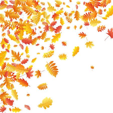 Oak, maple, wild ash rowan leaves vector, autumn foliage on white background. Red gold yellow oak dry autumn leaves. Stylish tree foliage vector october seasonal background.