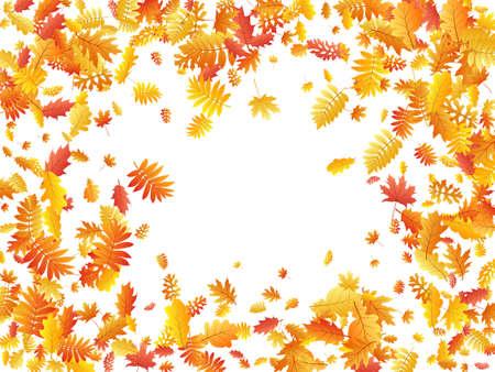 Oak, maple, wild ash rowan leaves vector, autumn foliage on white background. Red orange yellow oak dry autumn leaves. Flying tree foliage november seasonal background.