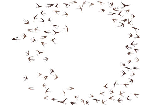 Flying martlet birds silhouettes vector illustration. Migratory martlets group isolated on white. Alar flying swallows line art. Simple birds in sky graphic design. Wildlife concept. Ilustración de vector