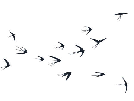 Flying swallow birds silhouettes vector illustration. Nomadic martlets bevy isolated on white. Rapid flying swallows line art. Small birds in sky graphic design. Wildlife concept. Stock Illustratie