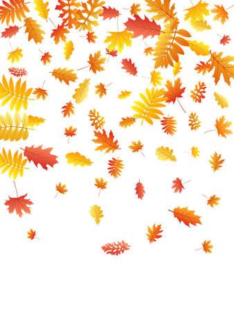 Oak, maple, wild ash rowan leaves vector, autumn foliage on white background. Red orange yellow wild ash dry autumn leaves. Stylish tree foliage vector october seasonal background.