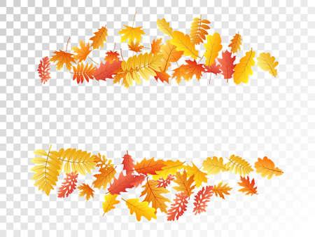 Oak, maple, wild ash rowan leaves vector, autumn foliage on transparent background. Red orange gold rowan and oak autumn leaves. Rich tree foliage september background graphics.