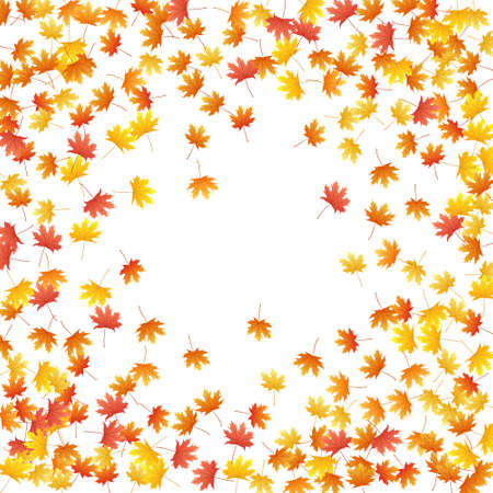 Maple leaves vector background, autumn foliage on white graphic design. Canadian symbol maple red yellow gold dry autumn leaves. Elegant tree foliage vector fall season specific background. 向量圖像