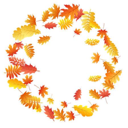 Oak, maple, wild ash rowan leaves vector, autumn foliage on white background. Red orange gold sorb dry autumn leaves. Rich tree foliage vector november seasonal background.