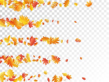 Oak, maple, wild ash rowan leaves vector, autumn foliage on transparent background. Red gold yellow oak dry autumn leaves. Abstract tree foliage vector october seasonal background.