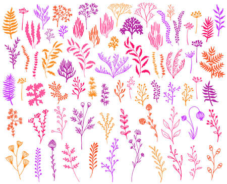 Meadow flowers, tree branches, algae water plants