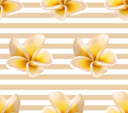 Plumeria or Frangipani Flowers and Stripes Vector Seamless Pattern. Tropical flowering plant, tree blossom caribbean hawaiian flowers, SPA symbol. Plumeria white yellow flowers blossom beige stripes