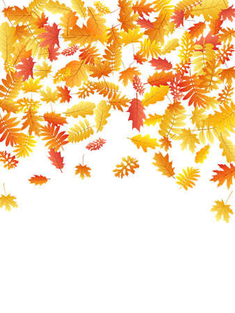 Oak, maple, wild ash rowan leaves vector, autumn foliage on white background. Red orange yellow sorb dry autumn leaves. Beautiful tree foliage november seasonal background.