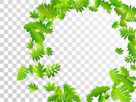 Forest foliage lush vector design. Tropical forest foliage closeup. Rowan and maple leaves flying. Herbal natural background. Environmental subtle vector.