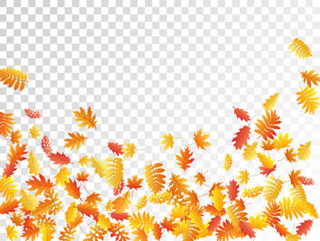Oak, maple, wild ash rowan leaves vector, autumn foliage on transparent background. Red orange yellow sorbus dry autumn leaves. Forest tree foliage vector september season specific background.