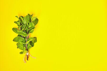 Useful herbs Mint.