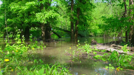 river in the forest , video clip footage Stock Photo