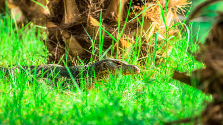hollow: dragon in the grassy hollow Stock Photo