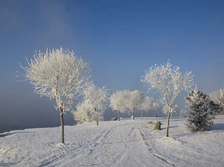 winter in the formation of rime on the trees photo