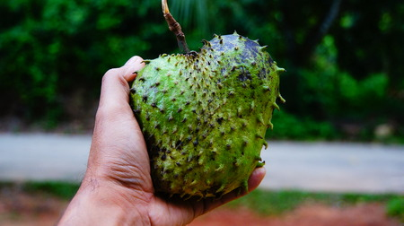 thorny: Thorny fruit