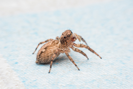 Araña, saltando araña Foto de archivo - 88495845