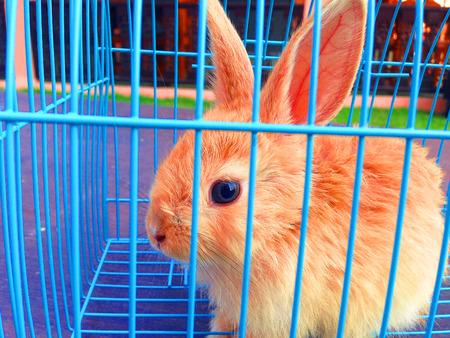 rabbit cage: Coniglio Brown in una gabbia blu