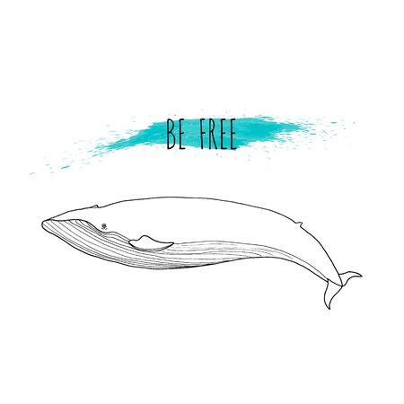 Blue whale vector illustration. Hand drawn, isolated on white background with blue watercolor splash. Marine mammal. Be free. Line drawing