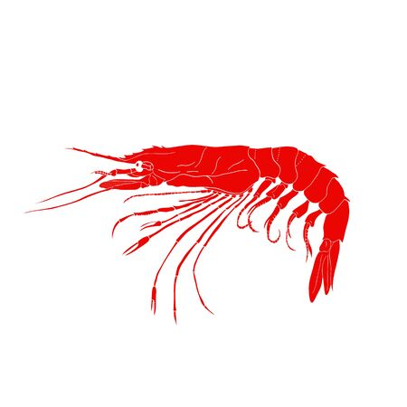 Red shrimp  isolated on white background. Hand drawn seafood design icon illustration for sushi restaurant menu or signboard. Prawn. Japanese marine products.