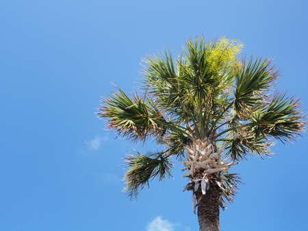 clamber: Albero nel cielo blu
