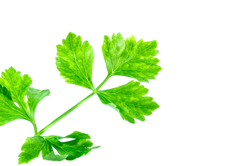 apium graveolens: celery sprig isolated on white Stock Photo