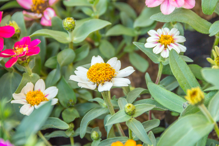 three white flower