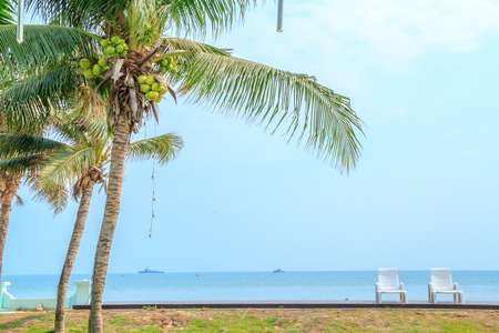 coconut tree and chair