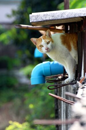 lovable: Lovable white and orange cat on wall