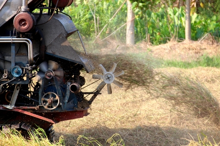 non cultivated land: Harvest Time In Thailand