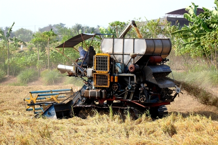 slog: Harvest Time In Thailand