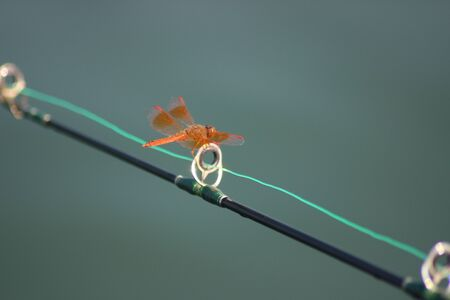 dragonfly on fishing rod photo