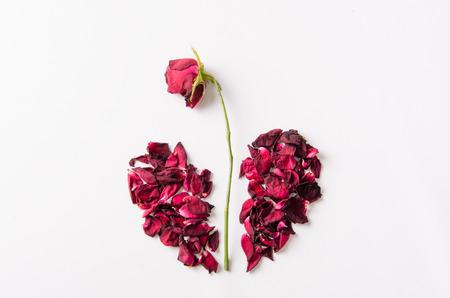 sear: Dried rose petal, broken heart. Stock Photo