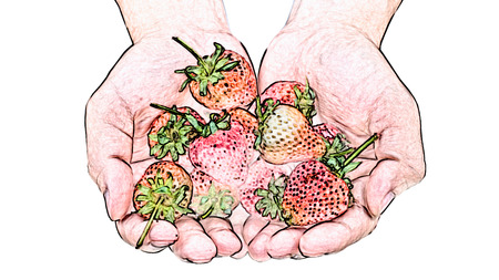 colored pencil: Handfuls of strawberries isolated on white background, colored pencil effect. Stock Photo
