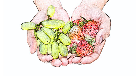Handfuls of strawberries and grapes isolated on white background, colored pencil effect. photo