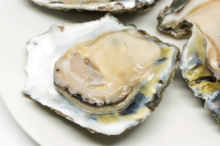ostracean: Raw oysters on a white background