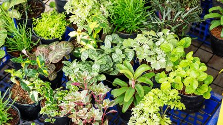 garden lawn: Gardening plants plantlet green nature. Stock Photo