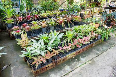plantlet: Gardening plants plantlet green nature. Stock Photo