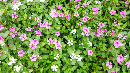 landscape flowers: Colorful flowers in the garden.