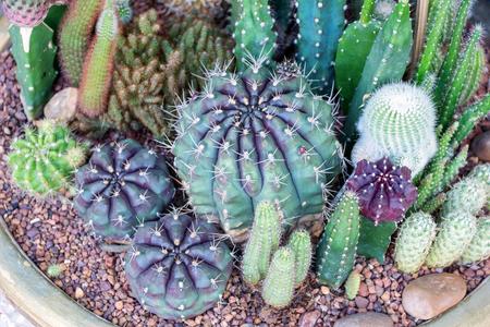 Cactus collection in the garden.