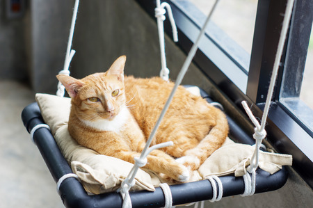 sleeping pad: Lovely red cat, soft focus.