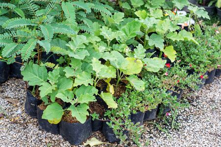 plantlet: Gardening plants plantlet green nature. Stock Photo