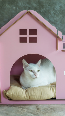 irresistible: cute white cat in the little pink home.