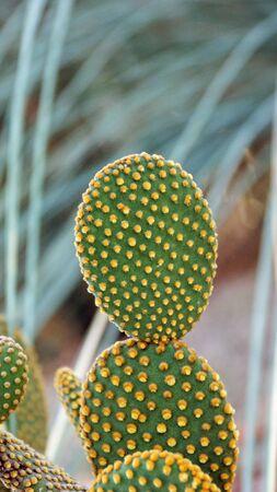Succulent cactus in a garden. Stock Photo