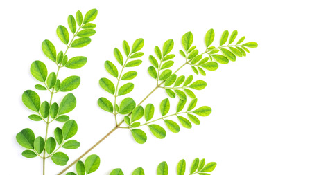Moringa leaves (Thai herbs) on a white background.