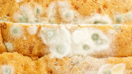 Close up of bread has a fungus. 写真素材 - 115951040