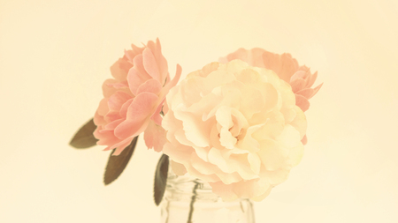 Rose flower in a vase, pastel color.