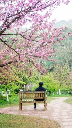 Man sitting in the cherry blossom garden Фото со стока